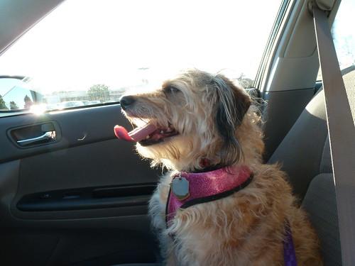 Winnie's car ride