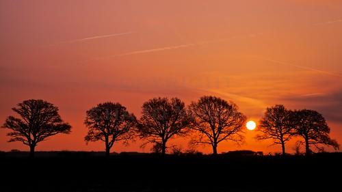 Trees At Sunrise