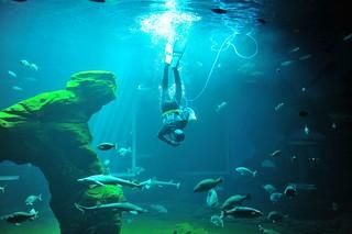 Nadando con tiburones.