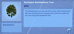 Burlington Bushblossom Tree