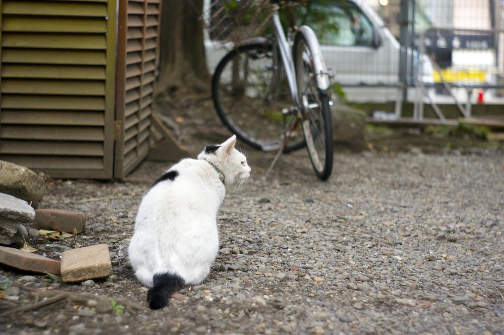 富岡八幡宮の猫