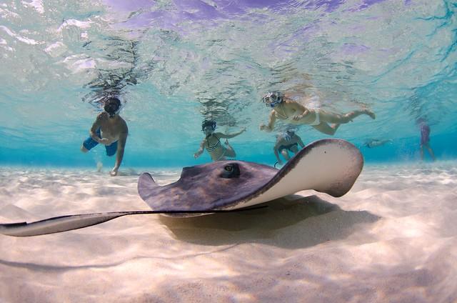 Stingray-Cayman-Sandbar 529