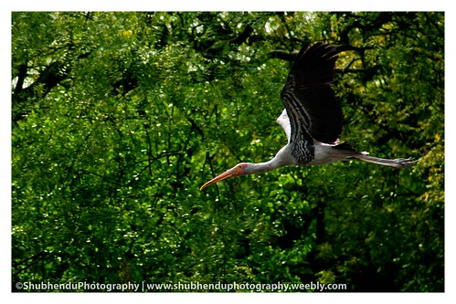 painted storks by ShubhenduPhotography