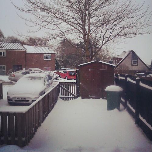 Backyard  .....