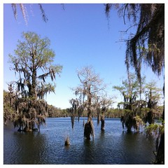 B is for Bald Cypress #camping #letteroftheweek #homeschool
