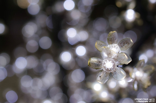 火樹銀花 #1
