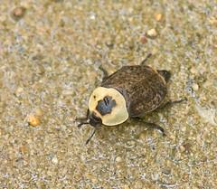 Bug On My Driveway