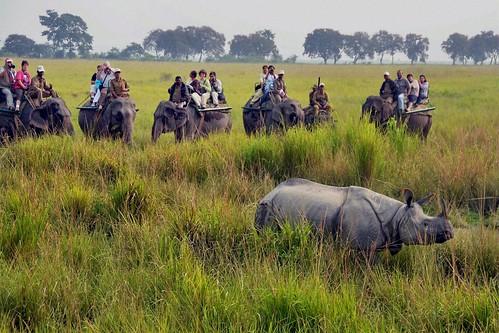 national kaziranga assam india kanchendzonganationalpark