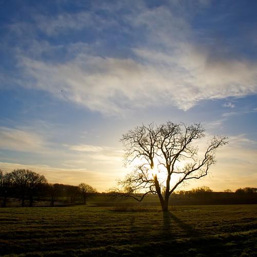 shadow sun tree field sunrise dawn day cloudy alba campo sole albero