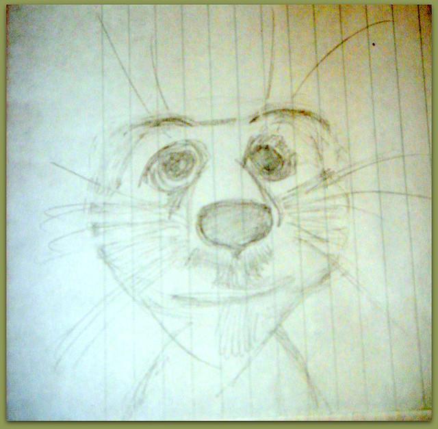 02-Meerkats and Owls Gufo, gufetto, suricato, suricati,