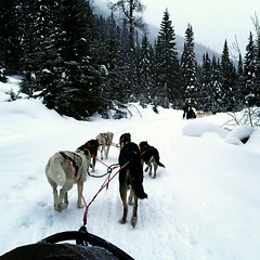 dog, winter, vehicle, snow, pet, mushing, dog sled, sled dog racing, sled dog, sled,