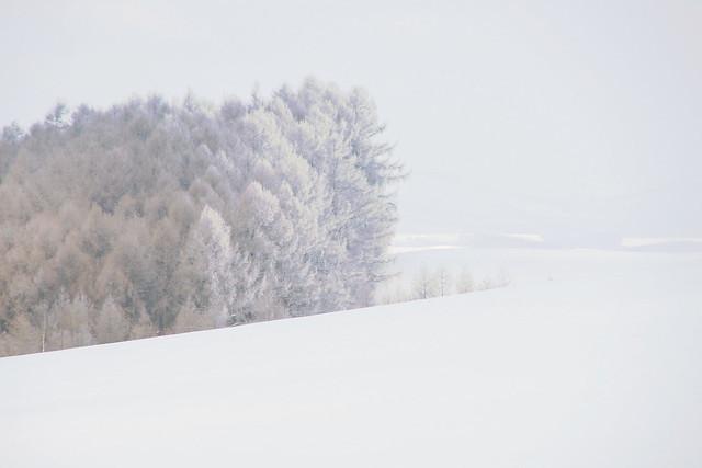 霧氷の通り道