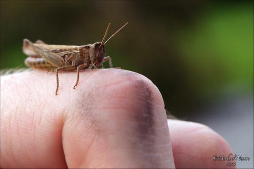 Finger Hopper