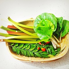 vegetable, leaf vegetable, produce, food, chard,