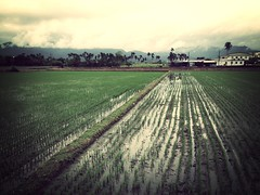 [Free Images] Nature, Field / Farm ID:201303091200