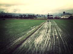 [フリー画像素材] 自然風景, 田園・農場 ID:201303091200
