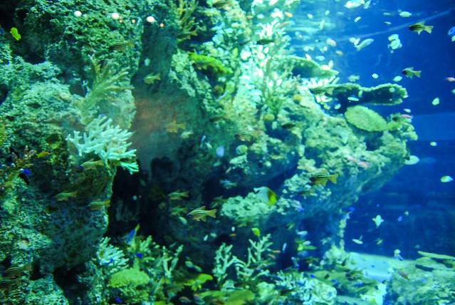 Marine Life Park Flickr - Photo Sharing!