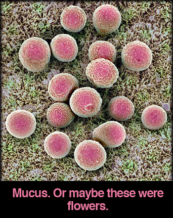 healthy-mucus