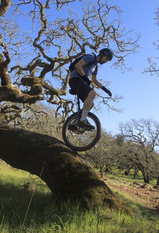 Josh riding the tree