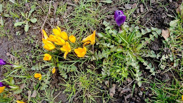 spring at standard 24