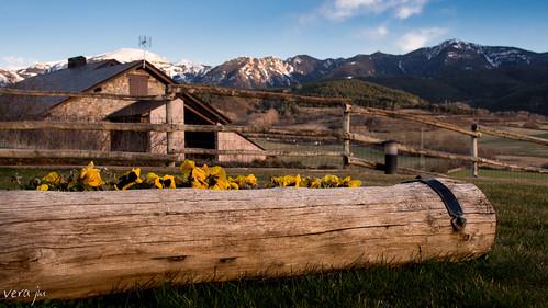 flowers sunset snow ski mountains nature olympus catalonia catalunya cataluña omd cerdanya pirineos pirinees em5