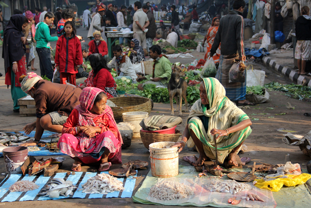 Ladies selling fish at the morning Terreti Market (Bazar) in Kolkata, India