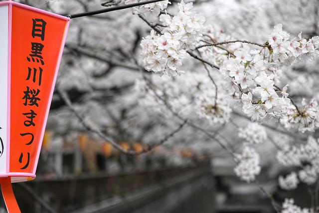 20130324_01_目黒川桜まつり