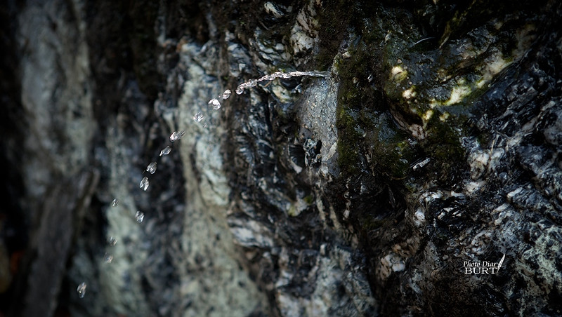 哈尤溪溫泉 (20)