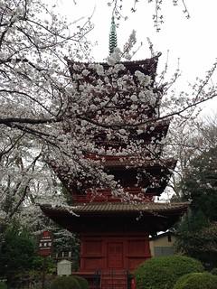 中山法華経寺の五重塔。桜も満開