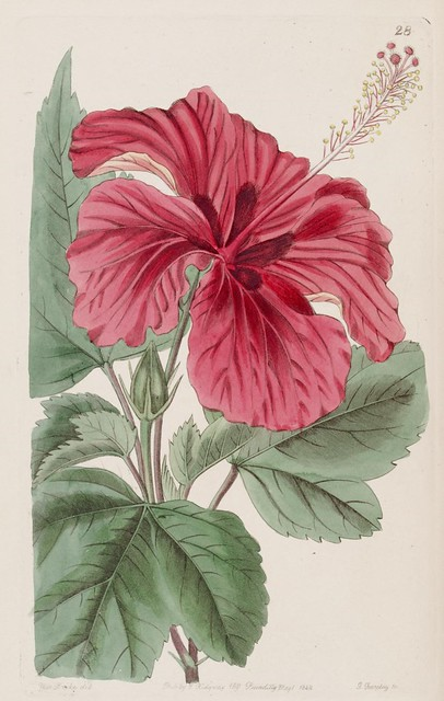 Edwards's botanical register v. 30
