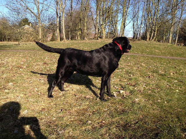 Labrador Front Leg Limp Advice Please Singletrack Magazine