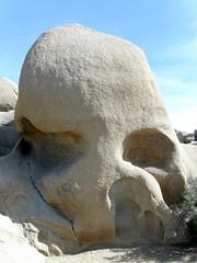 #8442 Skull Rock
