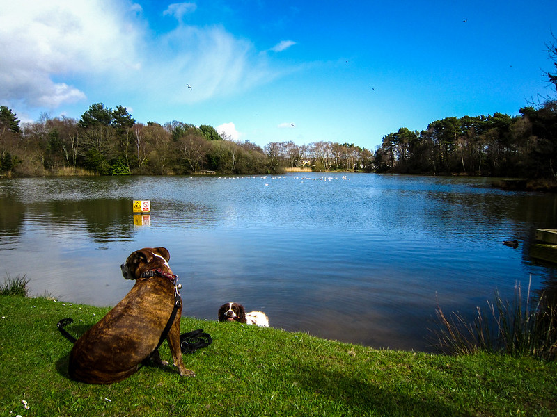 Jez and Max at Creekmoor Ponds