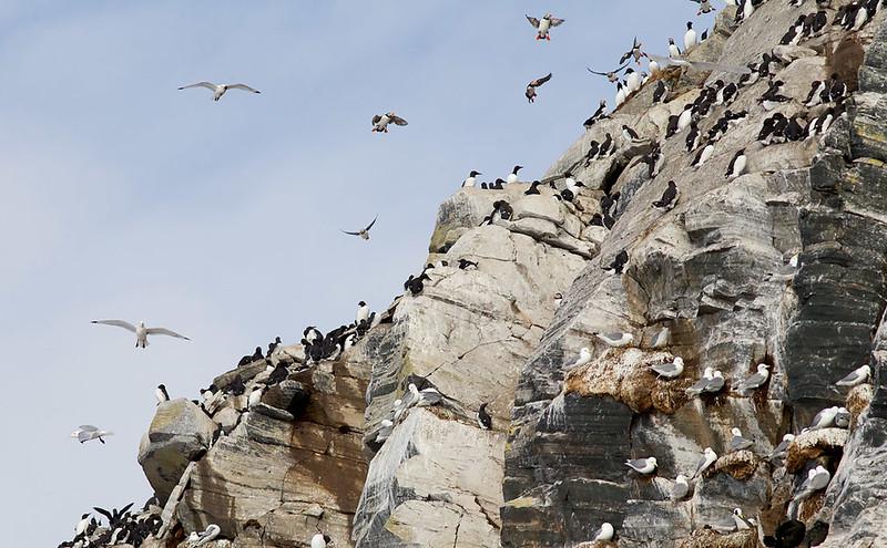 Busy cliffs