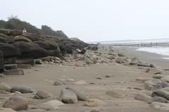 淤沙甚至掩埋了消波塊。