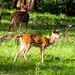 Spoted Deer, Mudhumalai Tiger Reserve