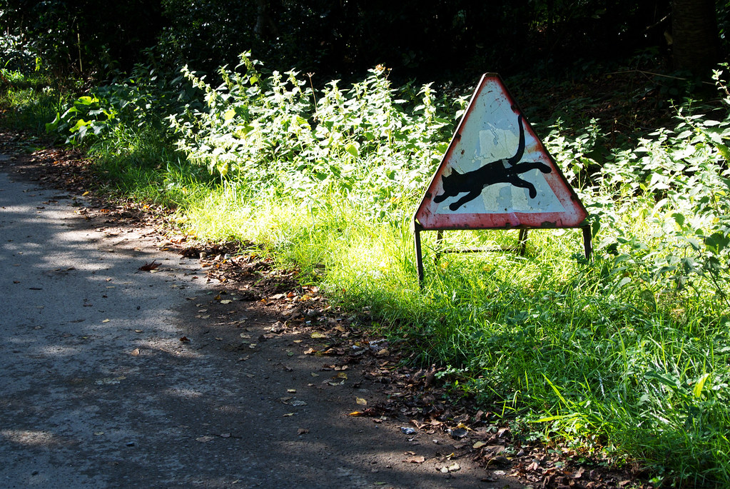 Warning: Cat East Grinstead Circular