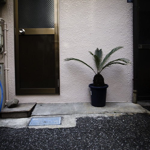 Single Palm and Door, Asakusa