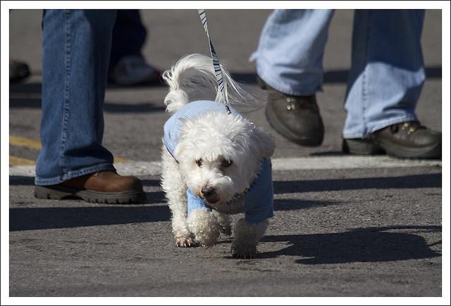 Soulard Pet Parade 2013-02-03 19