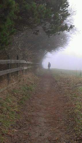 Fog by Seayard