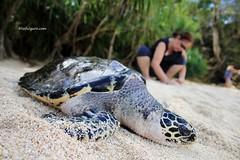 Turtle Sanctuary in Guimaras