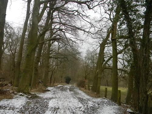 Snowy path 4