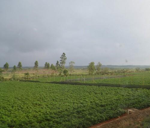 Hainan 13-Guangzhou-Haikou-Train (394)