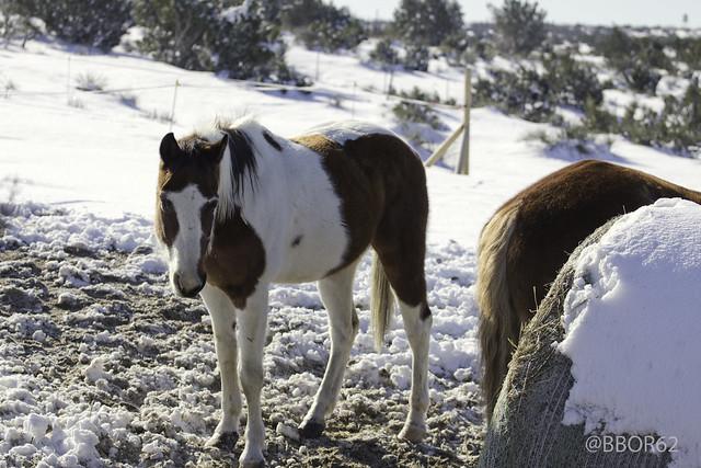 Amarillo Texas Horse