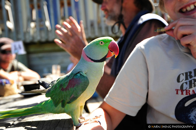 Really cute parrot!