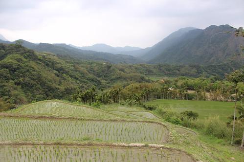 花蓮富里豐南村登錄為文化景觀的水梯田,居民賴以發展生態旅遊,但是入口處卻要蓋大量體的明隧道。