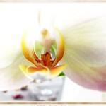 Orchideenträume