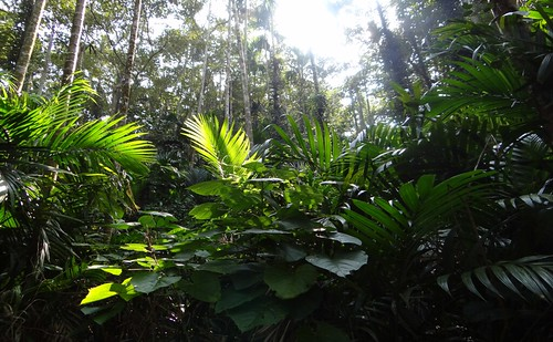 從林下望去,彷彿走進熱帶森林