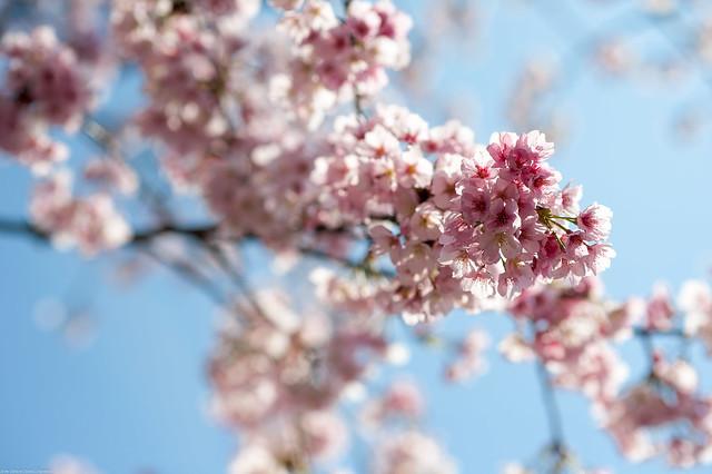Blossom in Sunshine - Aqua