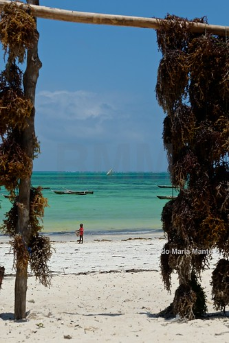 africa travel beach tanzania nikon zanzibar viaggio d800 mantero kiwenga stockcategories afszoomnikkor2470mmf28ged riccardomantero riccardomariamantero ljsilver71